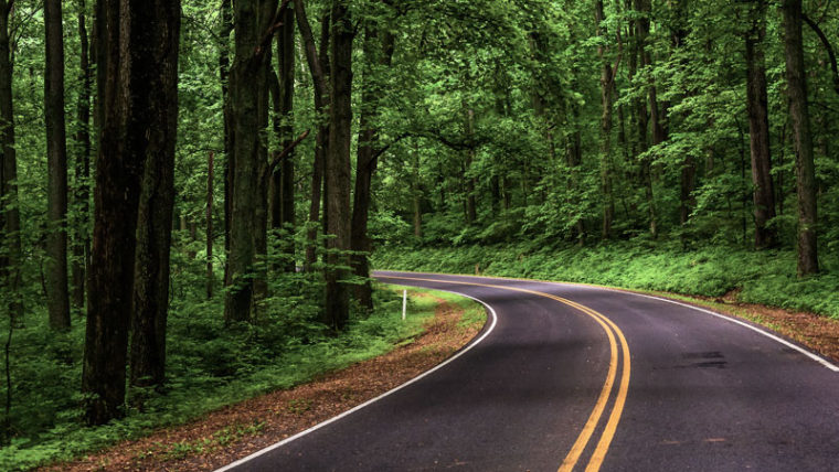 Road in the woods: A curve along Skyline Drive in Shenandoah National Park, Virginia